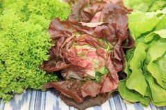 Fresh organic Lettuce on Farmers Market stock photos