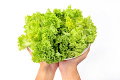 Fresh organic lettuce in hand Stock Photo