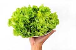 Fresh organic lettuce in hand Stock Images