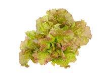 Fresh organic lettuce Stock Images
