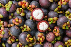 Fresh organic mangosteen Thai fruit. Royalty Free Stock Image