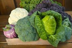 Fresh organic market vegetables on wooden background Stock Images