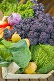 Fresh organic market vegetables on wooden background. Fresh organic vegetables - green pointed cabbage, purple and green curly kale, purple kohlrabi, broccoli Royalty Free Stock Photo