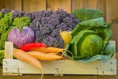 Fresh organic market vegetables on wooden background. Fresh organic vegetables - green pointed cabbage, purple and green curly kale, purple kohlrabi, broccoli Stock Image
