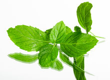 Fresh organic mint leaves Stock Image