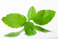 Fresh organic mint leaves Royalty Free Stock Photo
