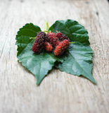 Fresh organic mulberry,  Focus on fruit of mulberry. Stock Photo
