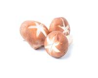 Fresh organic mushroom on white background. Fresh organic mushroom isolated on a white background Royalty Free Stock Photo