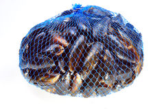 Fresh organic mussel in a blue net. Some fresh organic mussel in a blue net royalty free stock image