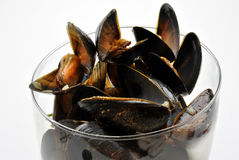 Fresh organic mussel in garlic butter. Some fresh organic mussel in garlic butter royalty free stock images