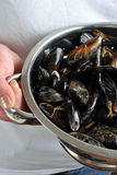 Fresh and organic mussel before preparation. Some fresh and organic mussel before preparation stock image