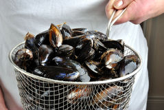 Fresh and organic mussel before preparation Stock Image