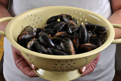 fresh and organic mussel before preparation Stock Images