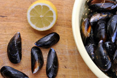 fresh organic mussel and on a timber board Stock Image