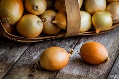 Fresh organic onions in a basket Royalty Free Stock Images