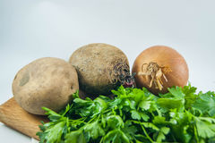 Fresh organic onions, beets, potatoes and parsley isolated. Background Royalty Free Stock Image