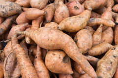 Fresh Organic Orange Sweet Potato against a background Stock Images