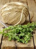 Fresh organic oregano (marjoram) Stock Image