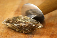 Fresh and organic oyster Stock Photography
