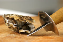 Fresh organic oyster from the irish west coast. Fresh raw organic oyster from the irish west coast Royalty Free Stock Photography