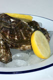 Fresh organic oyster on a plate with ice Royalty Free Stock Photography