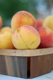Peach fruit. Fresh organic peach fruit in wooden basket in market Stock Images