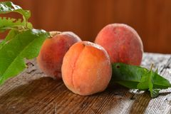 Fresh organic peaches Royalty Free Stock Photography
