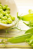 Fresh Organic Peas Stock Photography