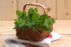 fresh organic peppermint from the garden Stock Photos