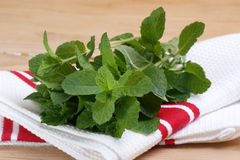 fresh organic peppermint from the garden Royalty Free Stock Images