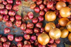 Fresh organic pile of red shallots and onions on net fabric background, selective focus, selling in market for food ingredient. Fresh organic pile of red Stock Photography