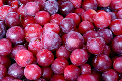 Fresh organic plum fruit background, photo taken at local farmer Royalty Free Stock Image