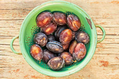 Fresh organic plums Stock Photography