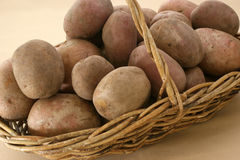 fresh organic potato in a basket Stock Images
