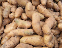 Fresh Organic Potatoes Royalty Free Stock Photo