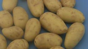 Fresh organic potatoes a blue  background. Royalty Free Stock Photo