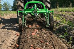 Working in potato field with tractor. Fresh organic potatoes are harvested with a mini tractor Royalty Free Stock Photography