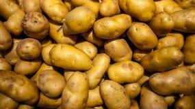Fresh organic potatoes. From the plantation Royalty Free Stock Photos