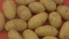 Fresh organic potatoes a red  background. Stock Photo