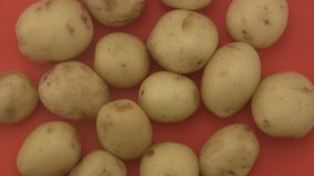 Fresh organic potatoes a red  background. Stock Photos