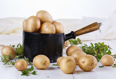 Fresh organic potatoes and thyme in vintage metal pot. Fresh organic potatoes and thyme in a rustic vintage metal pot on a white wooden background royalty free stock photo