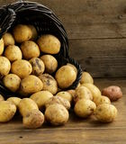 Fresh organic potatoes on a wooden background Stock Photos