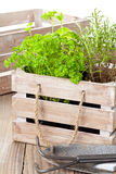 Herbs in wooden box Stock Image