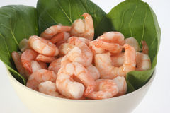 Fresh organic prawns ready to eat Royalty Free Stock Photos
