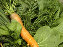Fresh organic produce Royalty Free Stock Images