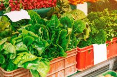 Fresh organic produce at the local farmers market. Farmers ` markets are a traditional way of selling agricultural products. The horizontal frame Royalty Free Stock Photography