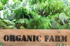 Fresh organic produce in wooden box. Fresh organic produce from farm in wooden box Royalty Free Stock Image