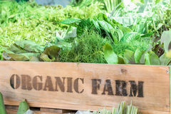 Fresh organic produce in wooden box Stock Image