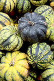Fresh organic pumpkin background, photo taken at local farmers m Royalty Free Stock Photo