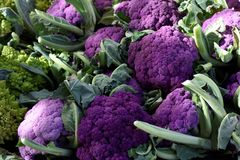 Fresh organic purple cauliflower. Offered from the farmer`s market fresh organic purple  cauliflowers in a pile for sale Stock Photography